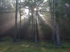 IMG00460 (freddiewentworth) Tags: daybreak nature rays outdoors trees landscape ohio plant ethereal light woods forest grass scenery morning