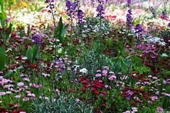 You Reap What You Sow (HiJinKs Media...) Tags: flowers colours colors colori natura nature peace calm serenity life blooms leaves
