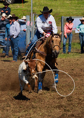 Cowgirl-roping_DSC4412 (Mel Gray) Tags: dungogrodeo dungogrodeo2017 dungog newcastle hunterregion annualevent eastersaturday melgrayphotography cowboys cowgirls equestrianevents