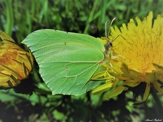 Butterfly 1222