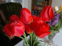 2017-04-12-8640 (vale 83) Tags: tulips nokia n8 macrodreams friends rotrossorougerood coloursplosion colourartaward beautifulexpression