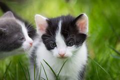 Kitten <3 (Emese Ruzsa) Tags: