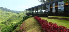 IMG_1638Panorama (alvinpoh) Tags: cameron highlands tea plantation