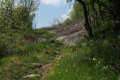 les Follatères (bulbocode909) Tags: valais suisse branson fully sentiers nature arbres vert bleu nuages