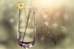 Spring elixir (bresciano.carla) Tags: trioplan flower spring pentax bokeh light oldlens bubbles 2017 colore fiori torino pentaxart