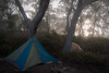 misty forest camp (gnarlydog) Tags: camping tent blackdiamondmegalight forest fog mist morning morninglight backlit contrejour backpacking australia offtrack wild wilderness outdoors tramping travellight