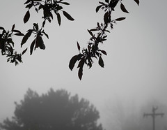 118/365 2017 foggy morning (d2roberts) Tags: 365the2017edition 3652017 day118365 28apr17 fog windsor colorado