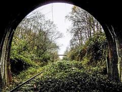 In The Jungle (Jason_Hood) Tags: disused abandoned railway railroad southstaffordshireline southstaffordshirerailway dudleytunnel tunnel dudley