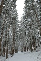 Winterlandschap in april (Annemeesie) Tags: schwarzwald snow winterlandscape sneeuwlandschap sneeuw schluchsee