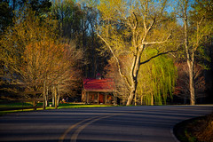 Spring Time in Georgia (PhotoJacko - Jackie Novak) Tags: georgia dawsonville spring goldenhour landscape road canon6d barn country springtime buds blooms sunlight