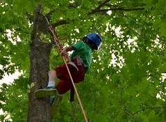 DSC_1295 (Montgomery Parks, MNCPPC) Tags: popupinmontgomeryparks bethesda treeclimbing climbatree tree climbingtrees kids children boys girls arborists elmstreeturbanpark spring may may2017 leaves treetrunks toddler