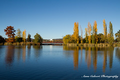 Canberra's autumn colours (Anna Calvert Photography) Tags: australia canberra lakeburleygriffin travelphotography autumn autumncolours landscape landscapephotography nature trees water reflections