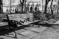Homeless Shelter (Phil Roeder) Tags: washingtondc blackandwhite leica leicax2 homeless bench blanket