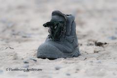 forgotten on the beach (Flemming Andersen) Tags: forgot it shoe sand forgotit hurupthy northdenmarkregion denmark dk beach