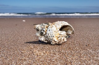 Interesting shell