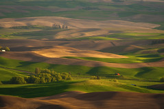 Hills of the Palouse (Meleah Reardon) Tags: eastern washington palouse hills layers sun shadow sunset landscape nature grass green brown pnw pacific northwest sunlight