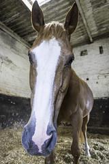 Mr G (Miss Sophisticated2013) Tags: thoroughbred memories beloved horse friend heartbroken