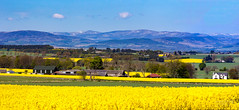 Near Craichie Angus 04 May 2017-0016.jpg (JamesPDeans.co.uk) Tags: view spring landscape season gb greatbritain hills colour prints for sale yellow scotland rapeseedcrop agriculture unitedkingdom crops digital downloads licence man who has everything britain panorama field wwwjamespdeanscouk fields angus farm landscapeforwalls europe uk james p deans photography digitaldownloadsforlicence jamespdeansphotography printsforsale forthemanwhohaseverything