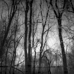 Trees In Water 113 (noahbw) Tags: captaindanielwrightwoods d5000 nikon abstract blackwhite blackandwhite branches bw forest landscape light monochrome natural noahbw rain raindrops reflection silhouette spring square trees water woods
