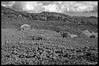 Die Macht der Natur (TitusT1960) Tags: 35faves hill hügel sky clouds berge berg wolken himmel natureza bellaitalia landschaften amateurphoto flickrphoto magicmoments nikondigital stone house haus lavageröll steine white black blackandwhite blackwhite schwarzweis sw bw nature lavastrom lava italy vulcano ätna vulkan sizilien italien landscape landschaft natur holiday urlaub d300 nikond300 nikon300 nikon
