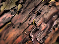 It's All About The Feels (Rantz) Tags: australia bark brunswick dikaiosyne melbourne rantz strawberrytree texture textures victoria