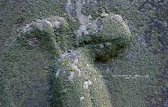 Angel Relief (Marcellina.) Tags: graveart taphophilia angel relief cemeteryart art profile oakhillcemetery dc washingtondc gardencemetery