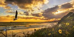 Sunset Light (Michael Lawenko dela Paz) Tags: sunset sky skydrama skies beach colorful coastal thecoast santabarbara california bacararesortandspa seagulls flying