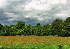 a meadow filled with sorrel (Sylvia Okkerse) Tags: nature approachingstorm stormy overcast sky netherlands holland meadow green cloudy clouds