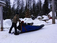 Getting ready to go (lmundy2002) Tags: dogs dogsled dogsledding huskies sleds whitefish olney whitefishmt olneymt montana mt winter wintersports