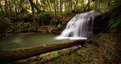 Big Log (EmeraldImaging) Tags: belmorefalls bowral waterfall ferns bush australianbush nsw sydney robertson australia sunrise trees