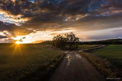 Después de la lluvia (allabar8769) Tags: camino campos camposdecastilla cigales contraluz naturalezarioalardelrey paisaje valladolid atardecer árbol