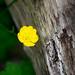 Wildflower (Kurt Grenig) Tags:
