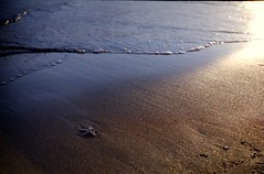 Starfish (taotti_01) Tags: leica ⅲa elmar 5cm sea ocean shore fujifilm pro400h sunset