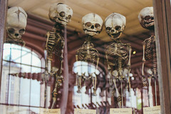 Rebel kidz (isabellarosa1) Tags: anatomie anatomy paris museum bones creep gruesome kids horror science