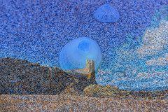 Beach (louisemccall53) Tags: beach sand st andrews scotland uk britain sun sea shells overlay nikon nikond3400