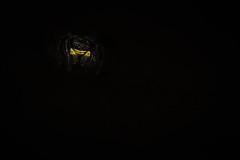 Soirée moustache. (SweeP_64) Tags: soirée moustache saltique araignée spider macro prxi nature cyrille masseys 6ril
