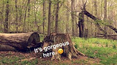 Random Snapchat (rbatina) Tags: rubbertoe april 24 24th 2017 random snapchat screenshot pictures photos dawes arboretum flowers trees grass outside outdoors bushes scenic wildlife nature preserve park newark ohio oh
