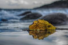 IMGP0728-Edit (jarle.kvam) Tags: seaweed raetnationalpark norway skagerak sea beach