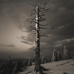 Tree (danipix.ch) Tags: froid cold ciel sky vieux bw paysage landscape arbre tree snow nuages neige cloud clouds alone seul winter weiss white old