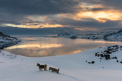 sunset for the puppies (Markus Trienke) Tags: dogs snow landscape winter sea kulusuk ocean dog nature grönland arctic coast ice cold kommuneqarfiksermersooq gl clouds sunset canon eos 5d mkiv
