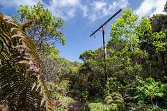 Forgotten Highway (Tom Fenske Photography) Tags: alakaiswamptrail hawaii napalicoast boardwalk hiking wilderness wet