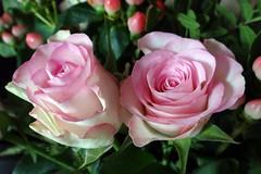 Rose (Gartenzauber) Tags: floralfantasy masterphotos perfectpetals