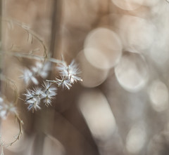 (C-47 [On the move]) Tags: bokeh dof light nature mothernature plants 7dmarkii helios44258mm composition details white whiteness