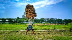 Livelihood (Prottoy Rahman) Tags: life lifestyle men village villager farmer cultivate