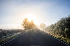 Fog! (Squid Rings (John Burland)) Tags: fog road tree light rays morning sunrise cheviot canterbury newzealand nz