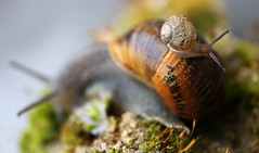One day son, all this will be yours. (PeskyMesky) Tags: snail macro macromondays intothewoods canon pov pointofview dof depthoffield flickr