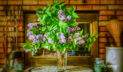 Signs Of Spring (dougkuony) Tags: signsofspring lilac lilacbouquet bouquet hearth hdr