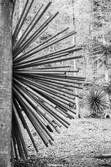 1/2 (MarcoAgustoniPhotography) Tags: trentino italia arte val sella natura bosco legno bianco e nero