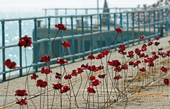 Poppies On The Pier - for Fence Friday! [Explored!] (RiverCrouchWalker) Tags: poppies gunnerspier shoeburyness essex poppieswave fence pier artinstallation 1418now paulcummins tompiper firstworldwarcentenary sculpture fencefriday countyofessex bokeh