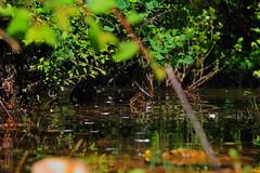 Entre deux surfaces (zuhmha) Tags: bimont lac lake water eau surface vert green nature feuille reflet reflect campagne countryside campain color couleur france minéral végétal pierre caillou herbe grass arbre tree